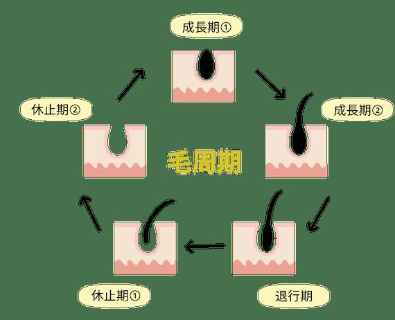 毛周期_figma